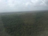 Dense forest just outside Cayenne